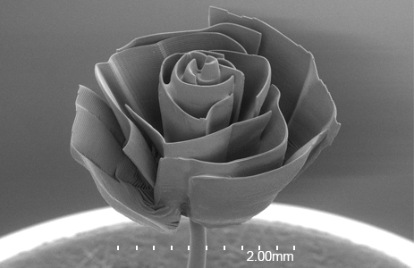 Miniature rose less than 3mm wide