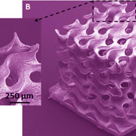 Exemple de biotechnologie 3D : structure gyroïde